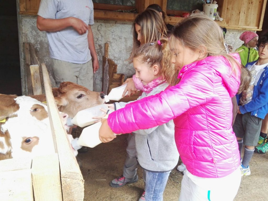 kids at educational farm in the dolomites
