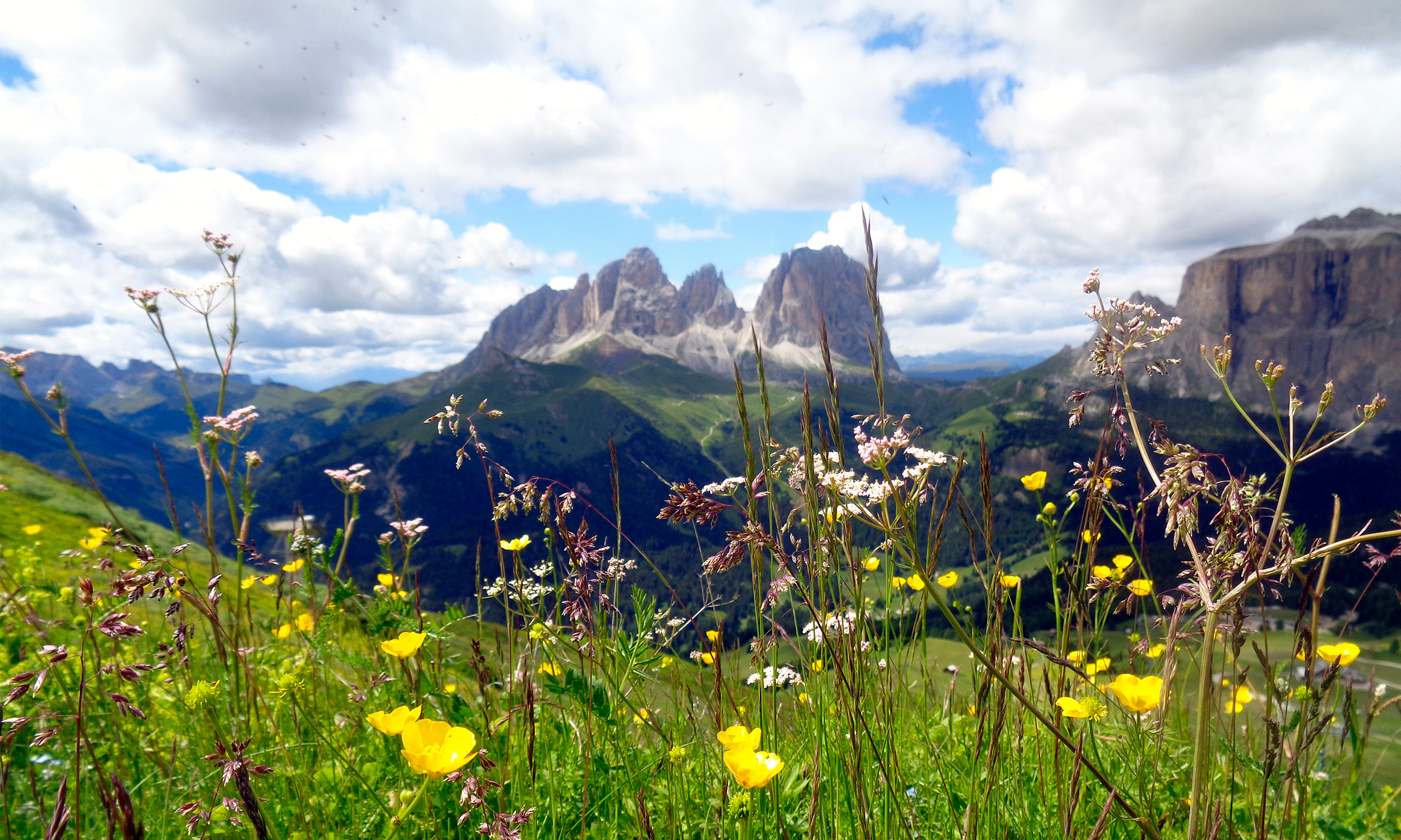 flowers with a wonderful view of the dolomites in val di fassa