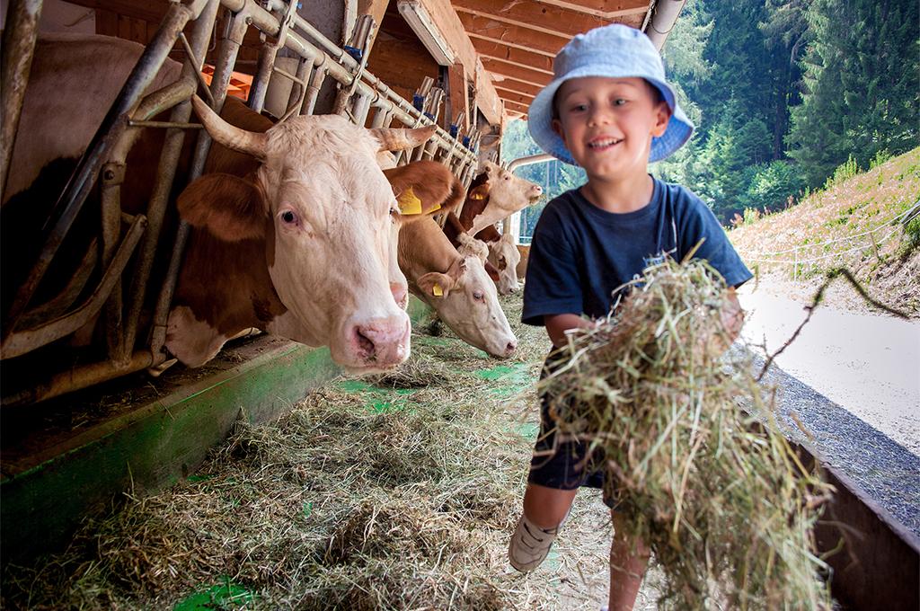 bimbo porta il fieno alle mucche in val di fassa