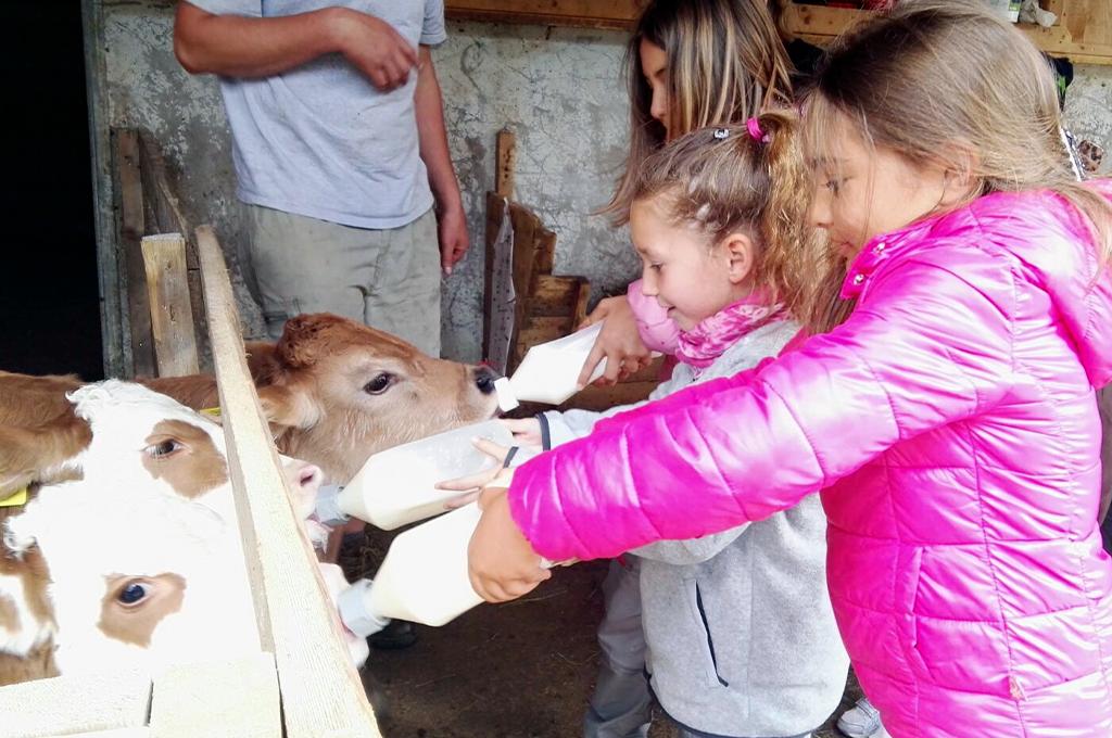 bambine nutrono vitellini nella fattoria didattica