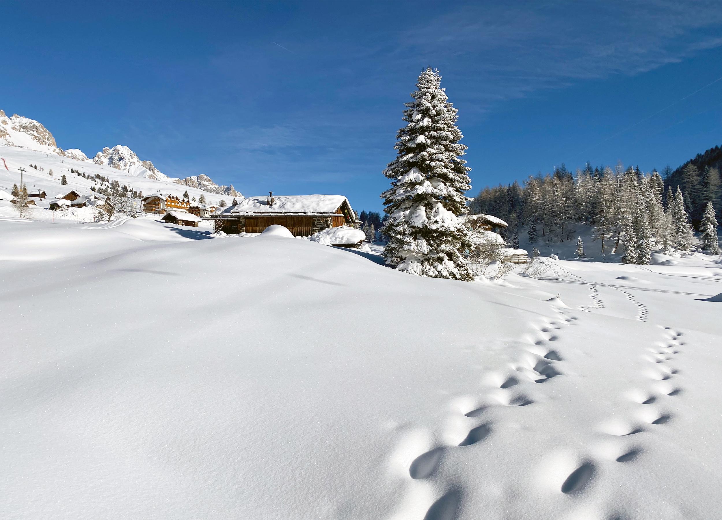 escursione sulla neve moena